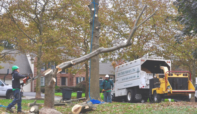 247 Tree Removal-Tampa's Best Tree Trimming and Tree Removal Services-We Offer Tree Trimming Services, Tree Removal, Tree Pruning, Tree Cutting, Residential and Commercial Tree Trimming Services, Storm Damage, Emergency Tree Removal, Land Clearing, Tree Companies, Tree Care Service, Stump Grinding, and we're the Best Tree Trimming Company Near You Guaranteed!