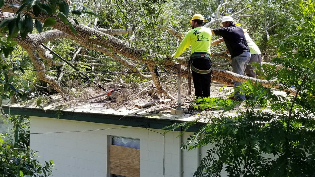 Emergency Tree Removal-Tampa's Best Tree Trimming and Tree Removal Services-We Offer Tree Trimming Services, Tree Removal, Tree Pruning, Tree Cutting, Residential and Commercial Tree Trimming Services, Storm Damage, Emergency Tree Removal, Land Clearing, Tree Companies, Tree Care Service, Stump Grinding, and we're the Best Tree Trimming Company Near You Guaranteed!