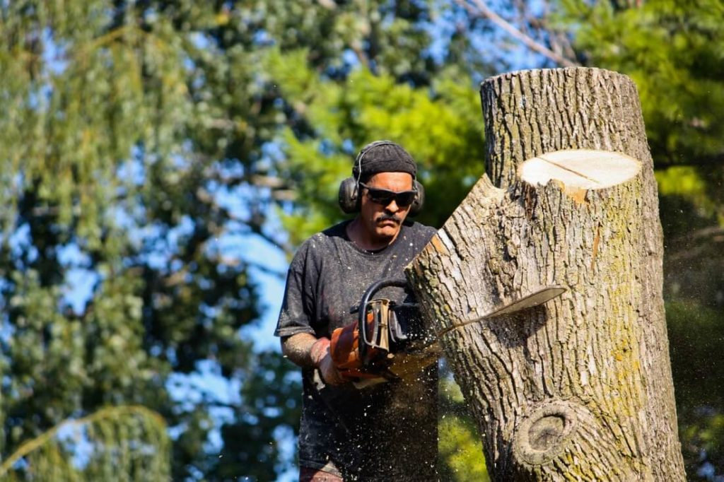 South Tampa-Tampa's Best Tree Trimming and Tree Removal Services-We Offer Tree Trimming Services, Tree Removal, Tree Pruning, Tree Cutting, Residential and Commercial Tree Trimming Services, Storm Damage, Emergency Tree Removal, Land Clearing, Tree Companies, Tree Care Service, Stump Grinding, and we're the Best Tree Trimming Company Near You Guaranteed!