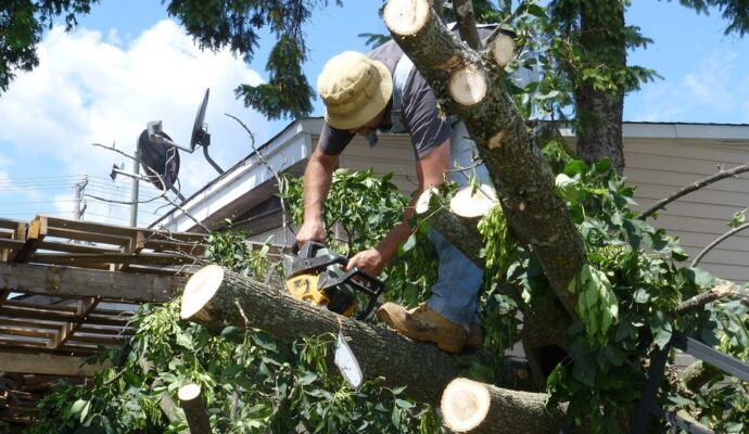 Tampa's Best Tree Trimming and Tree Removal Services-We Offer Tree Trimming Services, Tree Removal, Tree Pruning, Tree Cutting, Residential and Commercial Tree Trimming Services, Storm Damage, Emergency Tree Removal, Land Clearing, Tree Companies, Tree Care Service, Stump Grinding, and we're the Best Tree Trimming Company Near You Guaranteed!