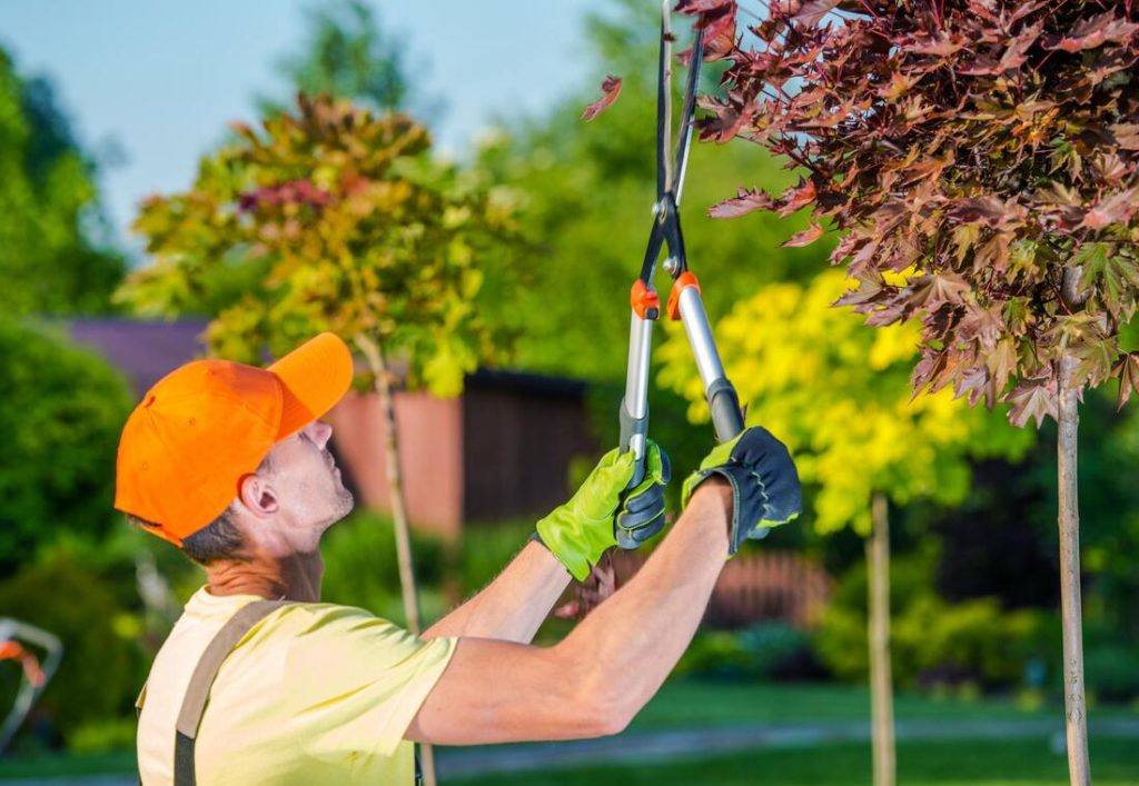 Temple Terrace-Tampa's Best Tree Trimming and Tree Removal Services-We Offer Tree Trimming Services, Tree Removal, Tree Pruning, Tree Cutting, Residential and Commercial Tree Trimming Services, Storm Damage, Emergency Tree Removal, Land Clearing, Tree Companies, Tree Care Service, Stump Grinding, and we're the Best Tree Trimming Company Near You Guaranteed!
