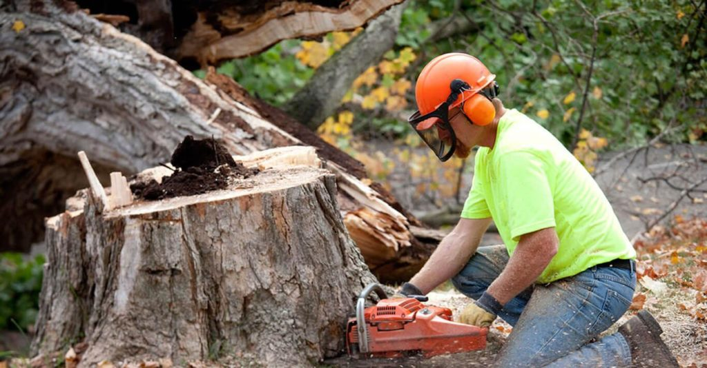 Town N Country-Tampa's Best Tree Trimming and Tree Removal Services-We Offer Tree Trimming Services, Tree Removal, Tree Pruning, Tree Cutting, Residential and Commercial Tree Trimming Services, Storm Damage, Emergency Tree Removal, Land Clearing, Tree Companies, Tree Care Service, Stump Grinding, and we're the Best Tree Trimming Company Near You Guaranteed!