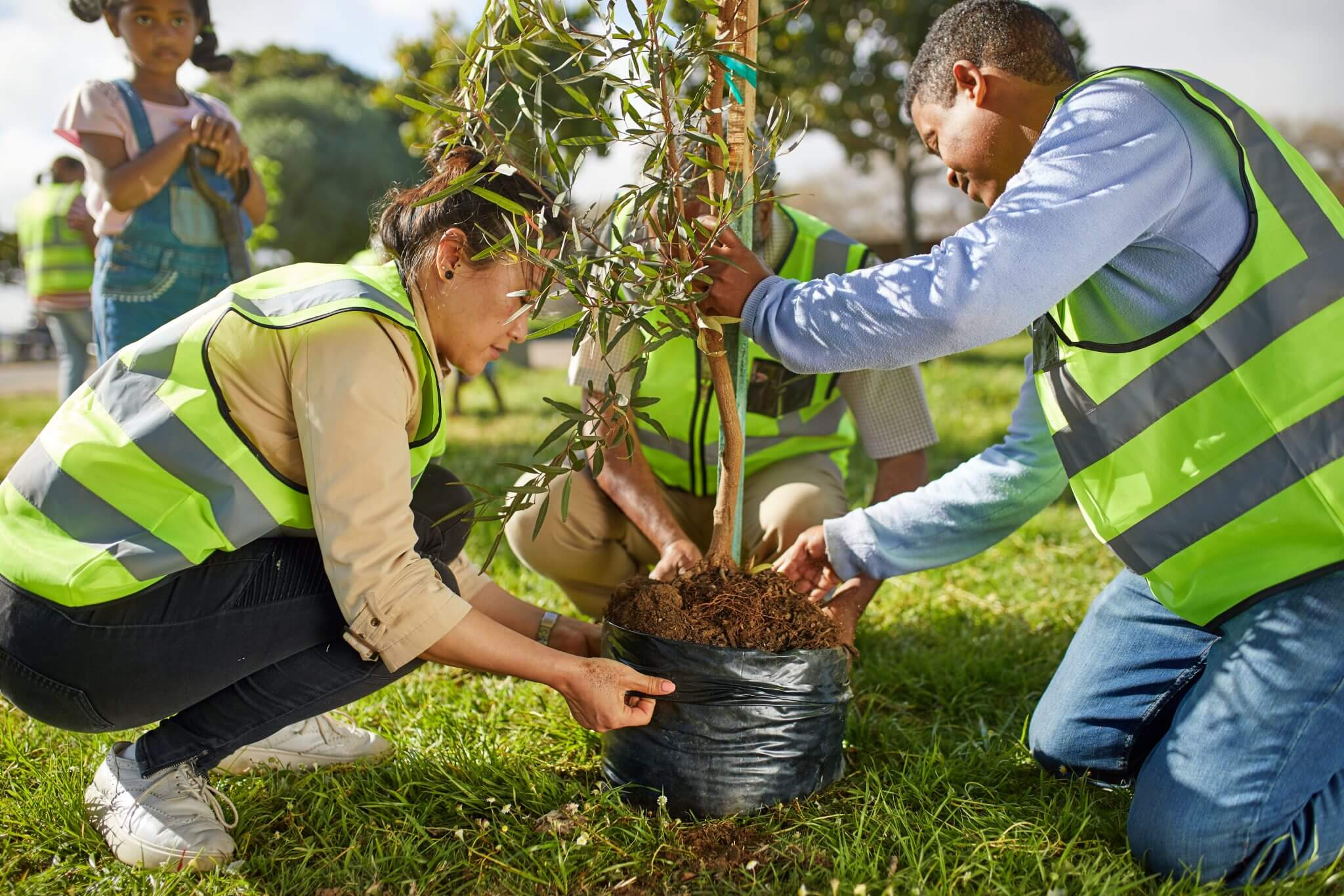 Tree Planting-Tampa's Best Tree Trimming and Tree Removal Services-We Offer Tree Trimming Services, Tree Removal, Tree Pruning, Tree Cutting, Residential and Commercial Tree Trimming Services, Storm Damage, Emergency Tree Removal, Land Clearing, Tree Companies, Tree Care Service, Stump Grinding, and we're the Best Tree Trimming Company Near You Guaranteed!