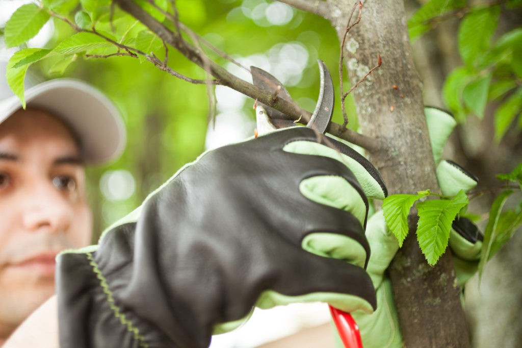 Tree Pruning-Tampa's Best Tree Trimming and Tree Removal Services-We Offer Tree Trimming Services, Tree Removal, Tree Pruning, Tree Cutting, Residential and Commercial Tree Trimming Services, Storm Damage, Emergency Tree Removal, Land Clearing, Tree Companies, Tree Care Service, Stump Grinding, and we're the Best Tree Trimming Company Near You Guaranteed!