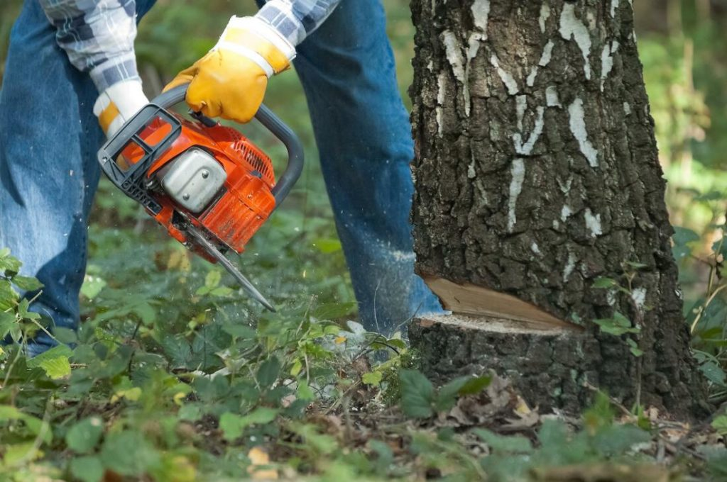 Tree Removal-Tampa's Best Tree Trimming and Tree Removal Services-We Offer Tree Trimming Services, Tree Removal, Tree Pruning, Tree Cutting, Residential and Commercial Tree Trimming Services, Storm Damage, Emergency Tree Removal, Land Clearing, Tree Companies, Tree Care Service, Stump Grinding, and we're the Best Tree Trimming Company Near You Guaranteed!