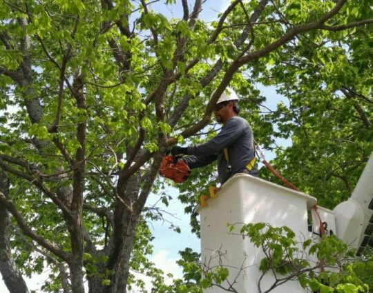 Tree Trimming-Tampa's Best Tree Trimming and Tree Removal Services-We Offer Tree Trimming Services, Tree Removal, Tree Pruning, Tree Cutting, Residential and Commercial Tree Trimming Services, Storm Damage, Emergency Tree Removal, Land Clearing, Tree Companies, Tree Care Service, Stump Grinding, and we're the Best Tree Trimming Company Near You Guaranteed!