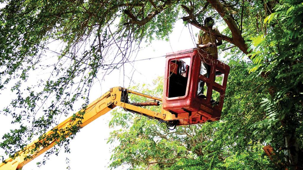 Wesley Chapel-Tampa's Best Tree Trimming and Tree Removal Services-We Offer Tree Trimming Services, Tree Removal, Tree Pruning, Tree Cutting, Residential and Commercial Tree Trimming Services, Storm Damage, Emergency Tree Removal, Land Clearing, Tree Companies, Tree Care Service, Stump Grinding, and we're the Best Tree Trimming Company Near You Guaranteed!